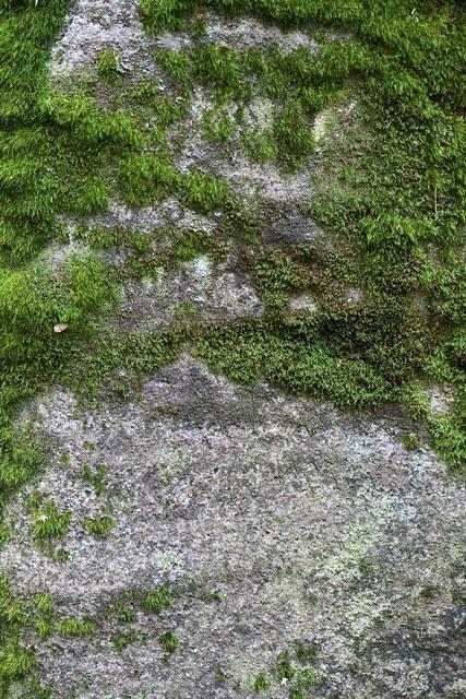 Moss lvtai green, nature landscapes.