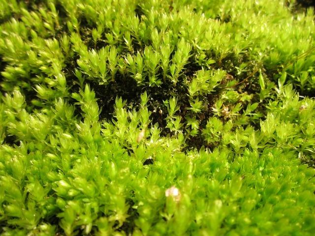 Moss plant flora, nature landscapes.