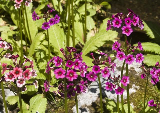 Mountain flowers garden botanical.