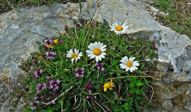 Mountain plant flowers, nature landscapes.