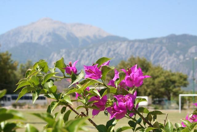 Mountains flowers turkey.