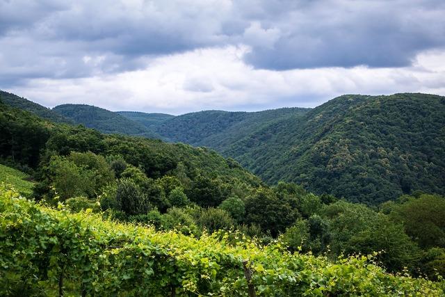 Mountains forest vineyard, nature landscapes.