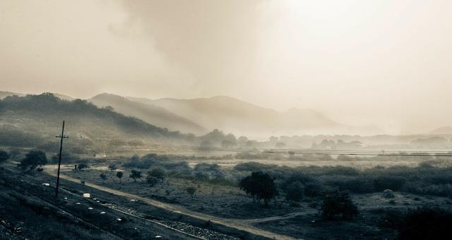 Mountains vegetation fog.