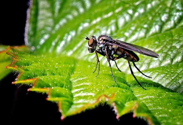 Mucha macro insect, animals.