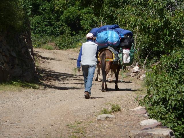 Mule muleteer road, transportation traffic.