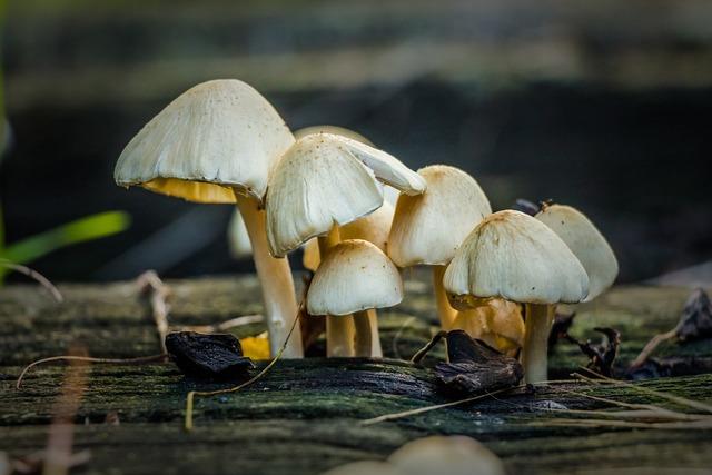 Mushroom battery hatter.