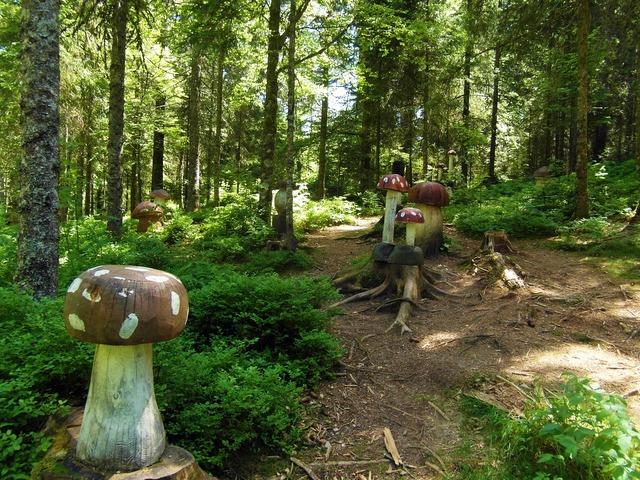 Mushroom forest mushrooms wood.