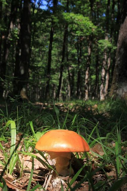 Mushroom fungi floor, nature landscapes.