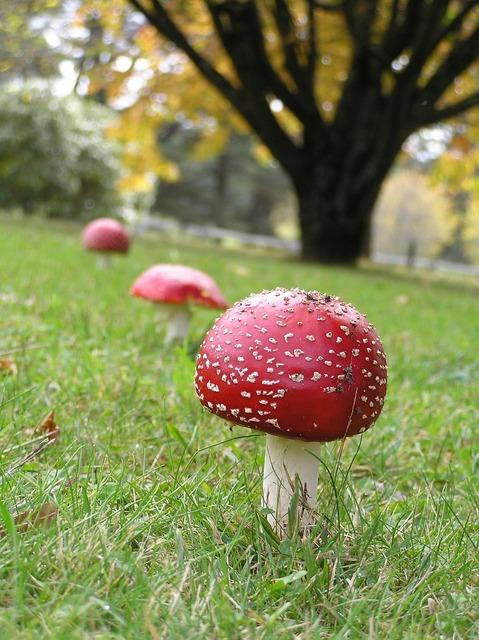 Mushroom fungi toadstool, health medical.