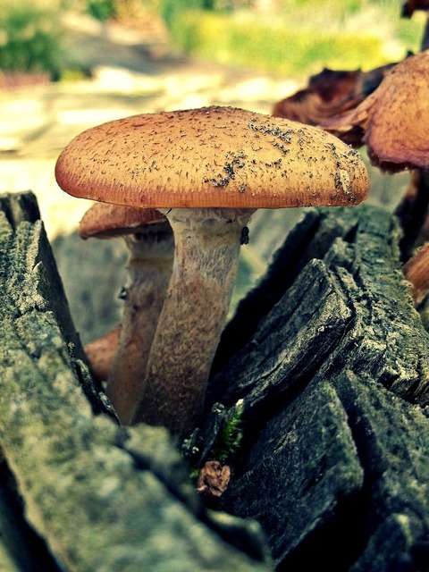 Mushroom log wood, nature landscapes.