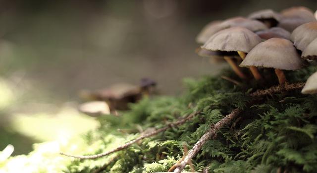 Mushroom nature live, nature landscapes.