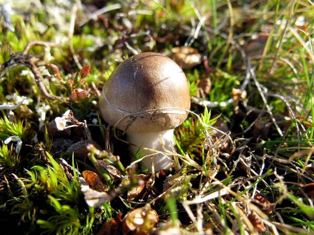 Mushroom sweden lapland, nature landscapes.