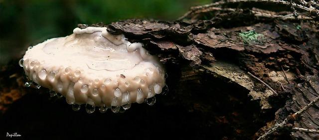 Mushroom tree fungus log, nature landscapes.