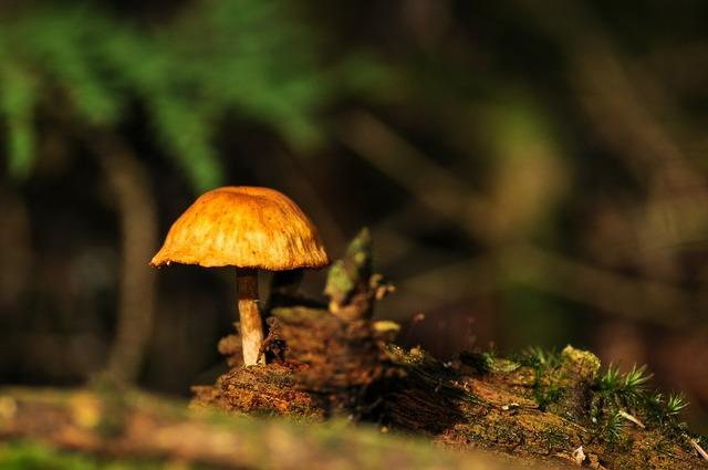 Mushrooms forest forest floor, nature landscapes.