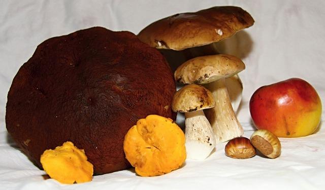 Mushrooms fungus toadstool, food drink.