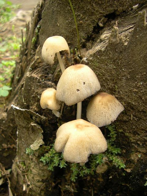 Mushrooms grebes poisonous mushrooms.