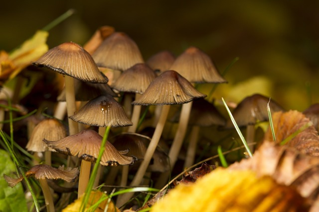 Mushrooms nature spores, nature landscapes.