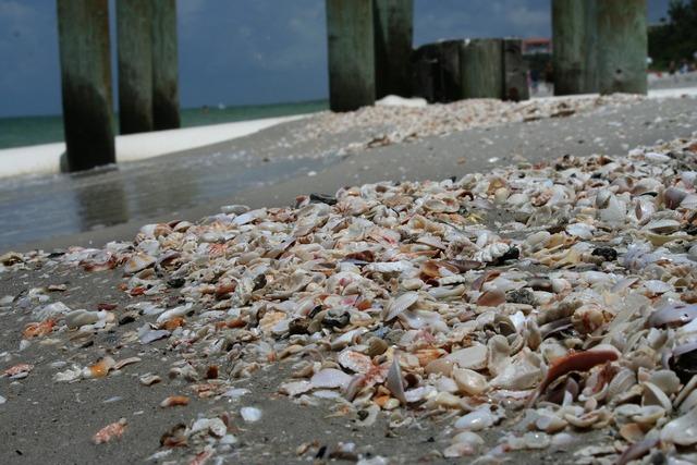 Mussels beach shells, travel vacation.