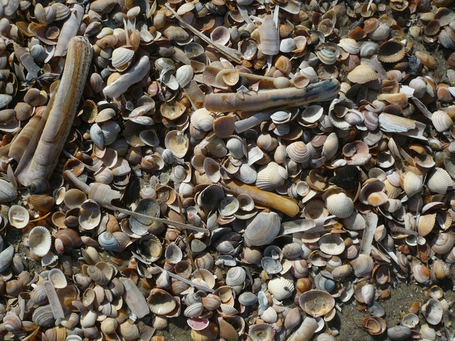 Mussels north sea beach, travel vacation.