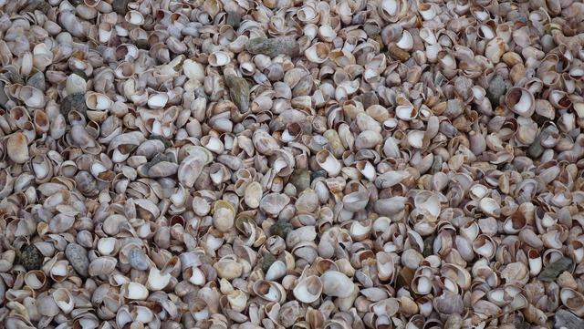 Mussels shells beach, travel vacation.