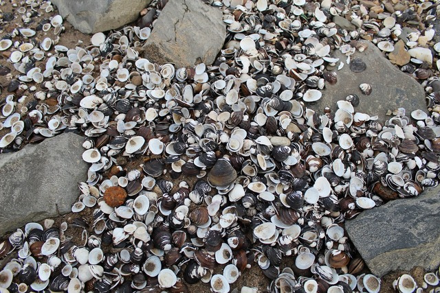 Mussels stones beach, travel vacation.