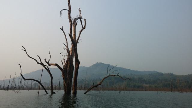 Myanmar jungle river.