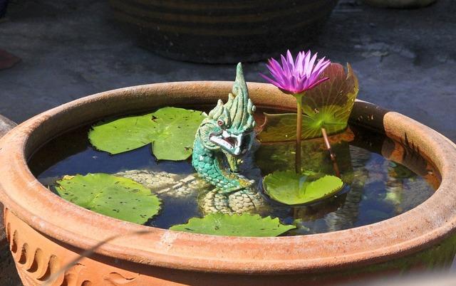 Naga lotus plant, nature landscapes.