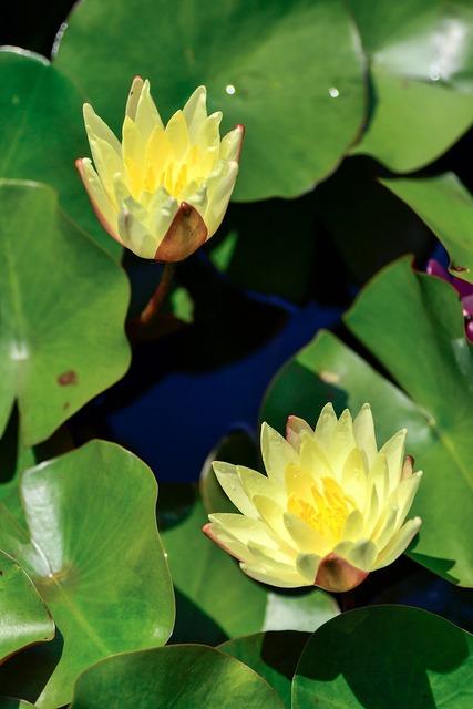 Natural plant flowers, nature landscapes.