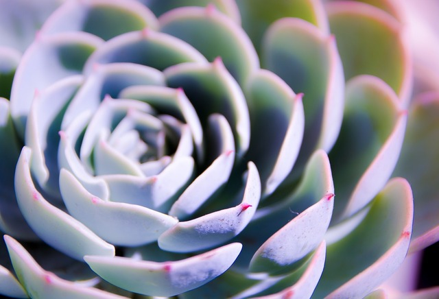 Natural texture plant, backgrounds textures.