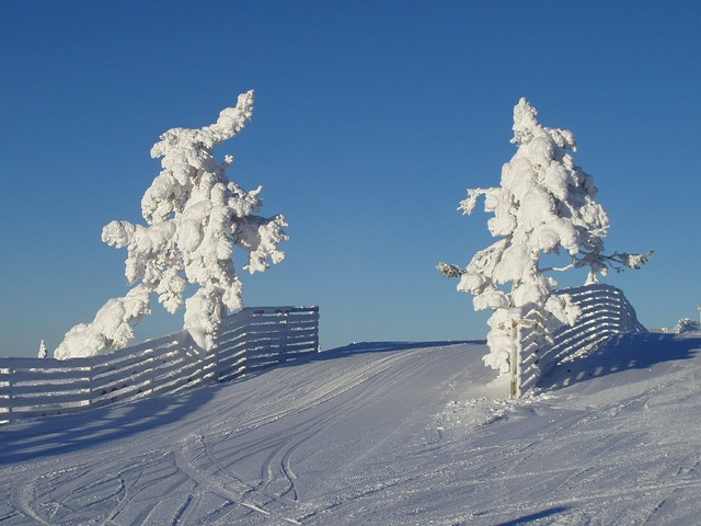 Natural winter snow.