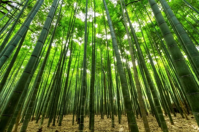 Nature bamboo green, nature landscapes.