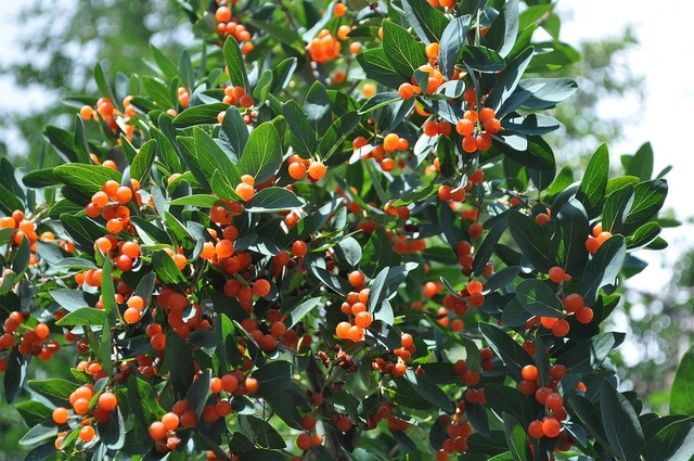 Nature berry tree, nature landscapes.