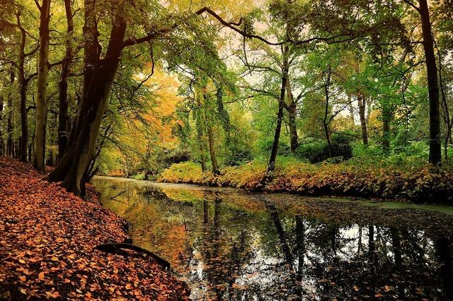 Nature leaf deciduous forest, nature landscapes.