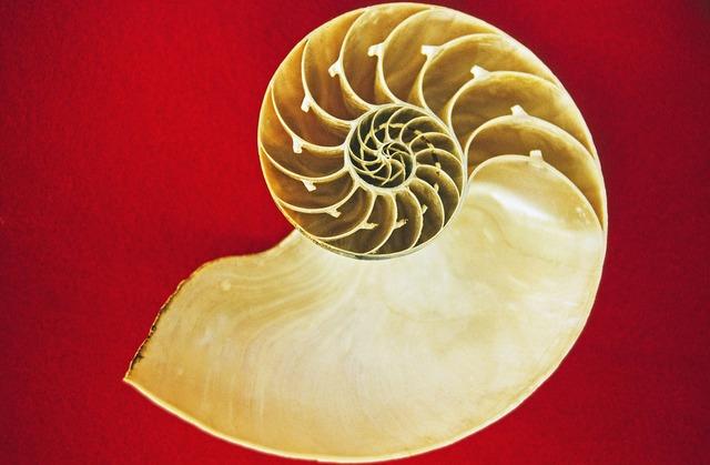 Nautilus cephalopods sea, animals.