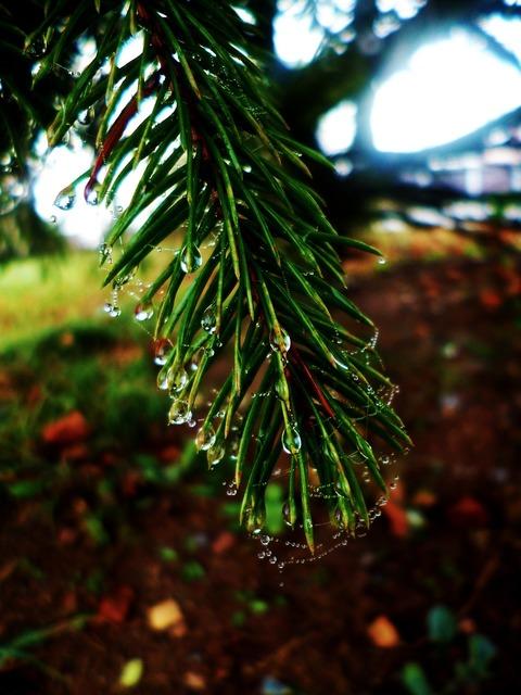 Needles drops web.