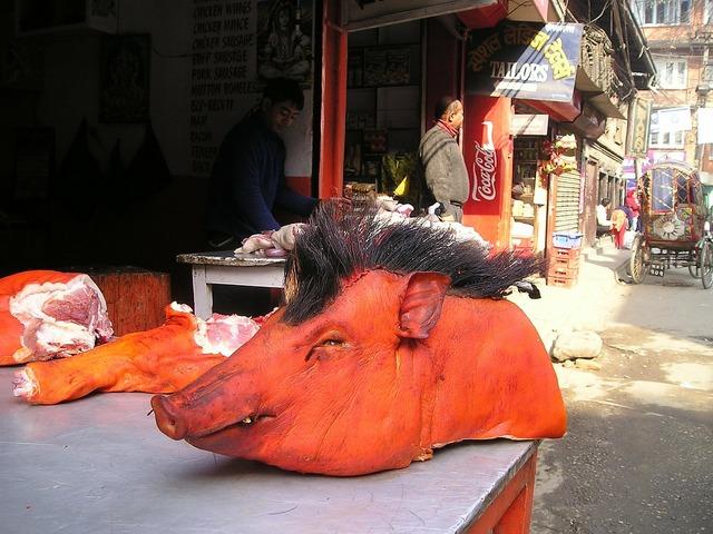 Nepal pig head.