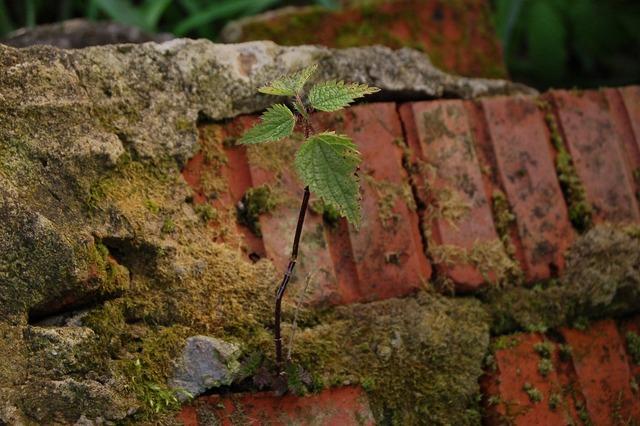 Nettle brick plant, nature landscapes.