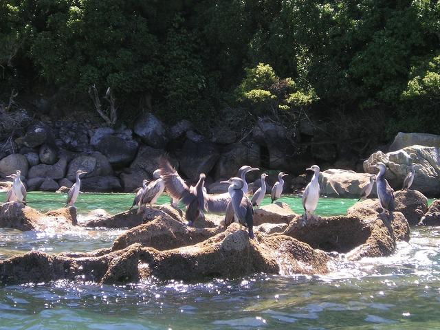 New zealand birds sea.
