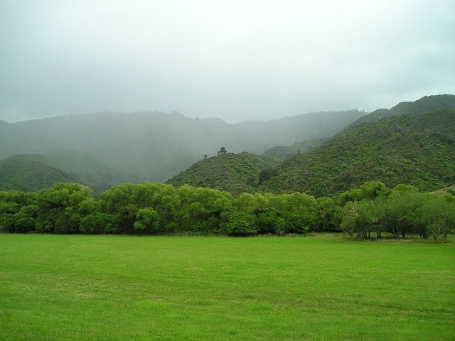 New zealand green meadow, nature landscapes.