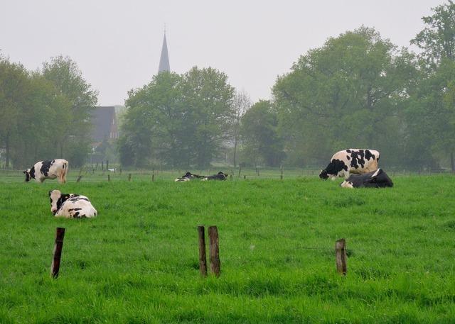 Niederrhein land cows, nature landscapes.
