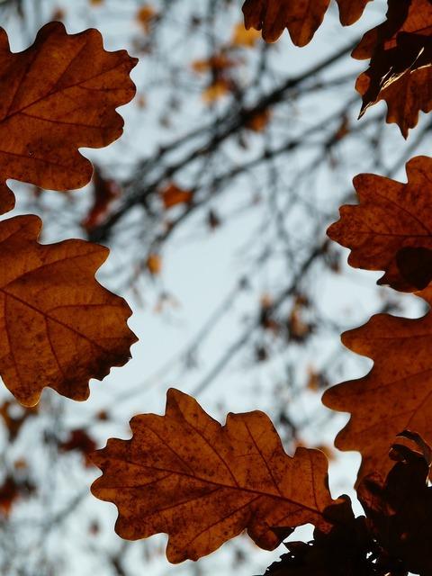 Oak leaves oak quercus, nature landscapes.