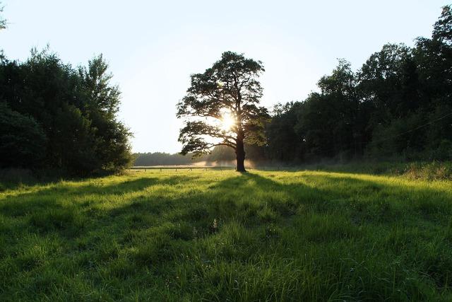 Oak west light.