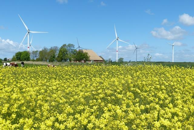 Oilseed rape wind clouds.