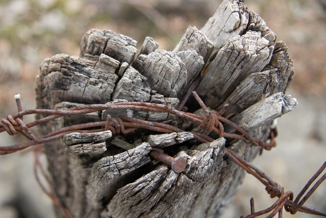 Old tree barbed wire slavery.
