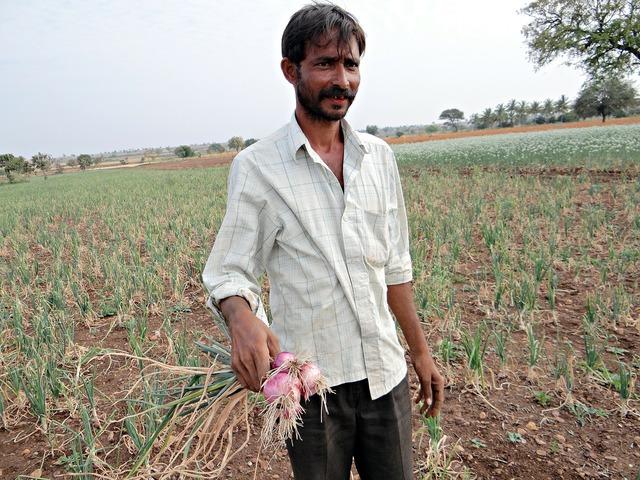 Onions farmer farm.