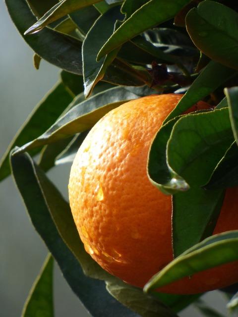 Orange naranjo citric, food drink.