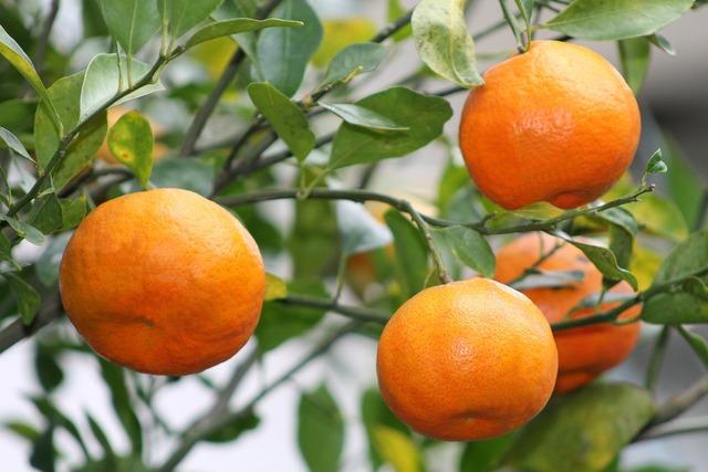 Oranges fruit veracruz, food drink.