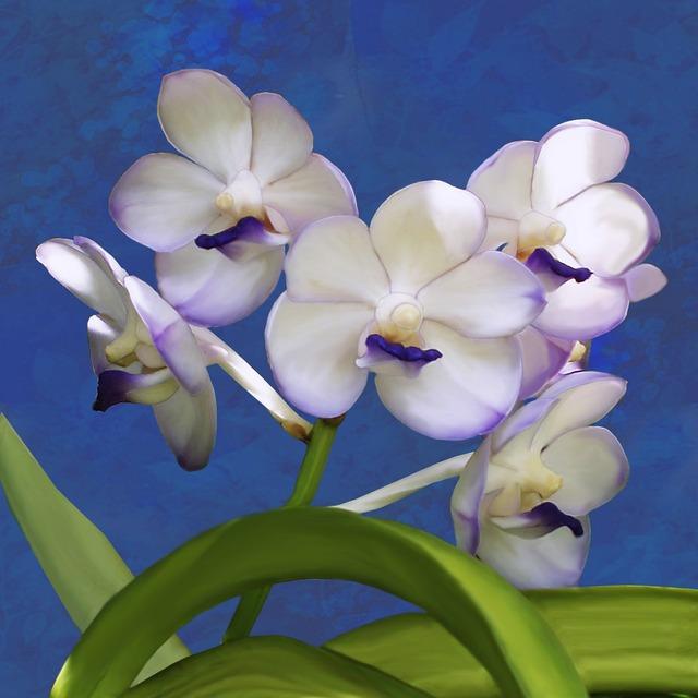 Orchid ascocenda plant, nature landscapes.