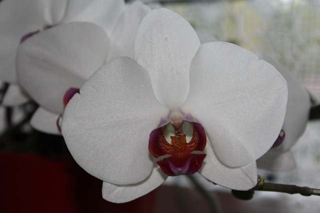Orchid blossom bloom, nature landscapes.