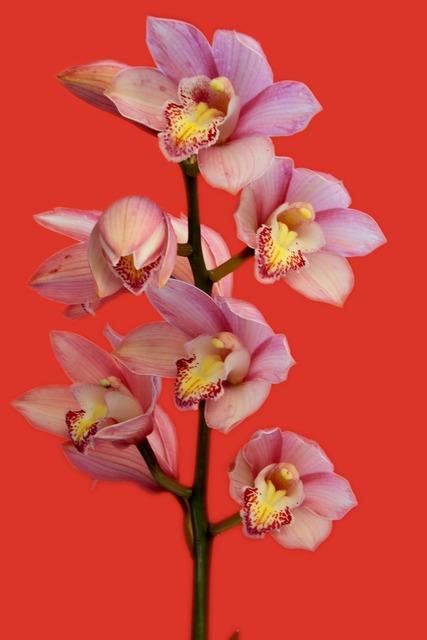 Orchid flowers plant, nature landscapes.